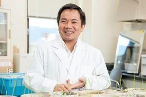 PGS. Trần Đăng Xuân - nhà khoa học Việt Nam tại Nhật Bản 'chinh phục' cỏ lau xâm lấn