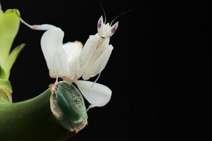 Điểm mặt loài sâu bọ đẹp nhưng có năng lực khiến con người thán phục