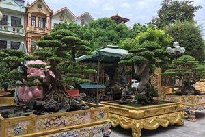 Hoa mắt với cây cảnh 'báu vật' của những đại gia Việt