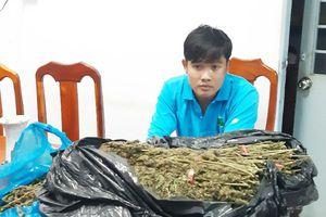 Tạm giữ người chở 10 kg thảo mộc nghi cần sa