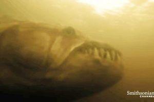 Kinh ngạc 'thủy quái Amazon' dễ dàng 'xé xác' cá sấu