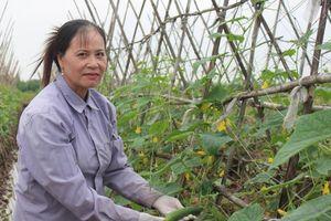 Nam Định sản xuất rau quả hữu cơ