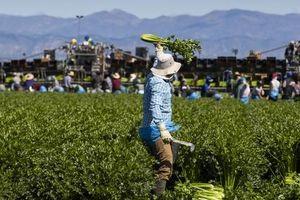 5 sự kiện nông nghiệp Hoa Kỳ nổi bật năm 2020