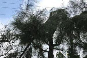 Nam sinh bị điện giật tử vong khi cắt tỉa cây: Cách chức hiệu trưởng, cảnh cáo hiệu phó