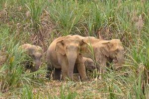 Người đàn ông bị thương nặng nghi bị voi rừng quật ở Đồng Nai