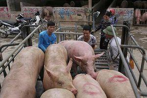 Giá lợn hơi hôm nay 5/1: Có nơi tăng 1.000 - 2.000 đồng/kg