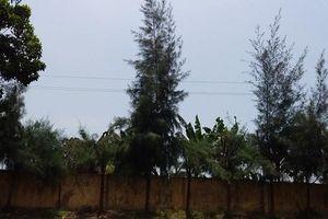 Vụ nam sinh lớp 9 tử vong khi cắt tỉa cây ở trường tại Hải Dương: Cách chức hiệu trưởng