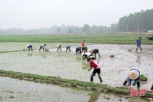 Nông dân huyện ven biển Hà Tĩnh nhanh tay sản xuất vụ xuân