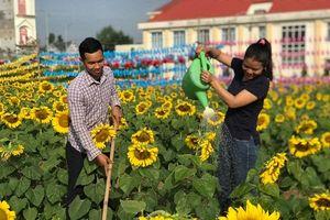 Dân mạng 'tan chảy' trước vẻ lãng mạn mê hồn của cánh đồng hoa mặt trời ở Bình Phước