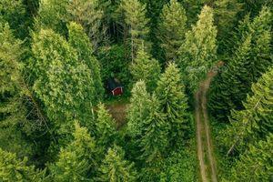 Bài học giải cứu rừng từ Vương quốc Na Uy