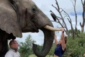 Bám vào ngà voi để biểu diễn kéo xà, một cô chủ phòng gym bị cư dân mạng chỉ trích thậm tệ
