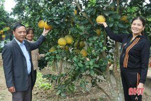 Bưởi Diễn, bưởi da xanh cho quả ngọt trên đất đồi Vũ Quang