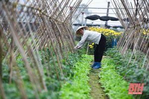 Nông dân Thanh Hóa chủ động phòng, chống rét cho cây trồng