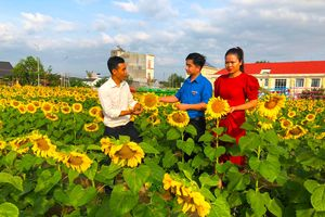Thanh niên 9x khởi nghiệp với mô hình nông trại hoa, 'hút hồn' hàng chục nghìn du khách
