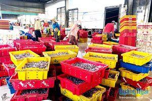 Tàu cá không có giấy chứng nhận an toàn thực phẩm: Sẽ bị xử phạt nặng