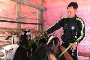 Chủ động chống rét cho vật nuôi