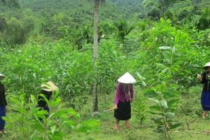 Đạt và vượt chỉ tiêu giảm nghèo bền vững