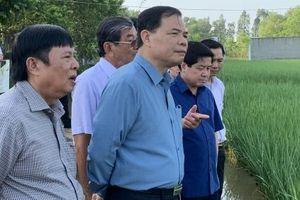 Bộ trưởng Nguyễn Xuân Cường thăm cánh đồng lúa ST25 tại Sóc Trăng