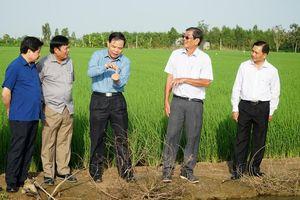 Kiểm tra sản xuất lúa vụ đông xuân 2020 - 2021 tại tỉnh Sóc Trăng
