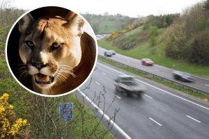 Bí ẩn dấu chân khổng lồ của mèo lớn ở vùng đất cổ kính xứ Wales