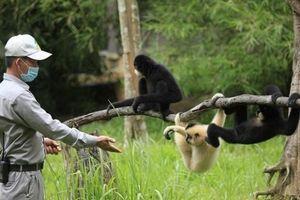 Những 'bảo mẫu' thầm lặng tại Vinpearl Safari