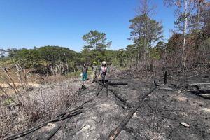 Gia Lai: Khởi tố Chủ tịch Hội đồng thành viên để làm rõ vụ hủy hoại rừng