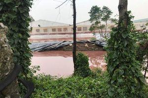 Tiền Hải (Thái Bình): Trang trại lợn bức tử môi trường