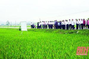 Hiệu quả từ chuyển giao tiến bộ khoa học - kỹ thuật trong sản xuất nông nghiệp