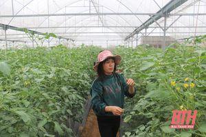 Xã Đông Yên phát triển sản xuất, nâng cao thu nhập cho người dân