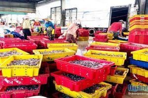 Quảng Ngãi: Xử phạt nặng tàu cá vươn khơi không có giấy chứng nhận an toàn thực phẩm