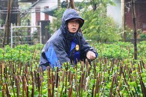 Nông dân Huế xuống đồng dầm mình giữa mưa rét như cắt da thịt