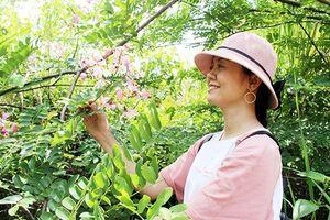 Những mùa hoa rừng ở Đồng Nai