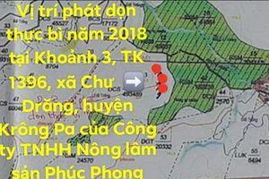 Công ty Phúc Phong Gia Lai: 'Chúng tôi không phá rừng'