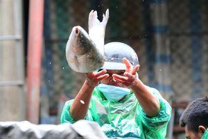 Tay trần bê đá lạnh, bắt cá tươi trong cái rét thấu xương Hà Nội