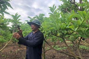 Trái cây sẵn sàng lên mâm ngũ quả