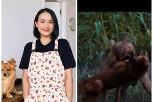Tại sao YouTuber Giang Ơi lại bất ngờ lên tiếng chỉ trích gay gắt phim 'Cậu Vàng'?