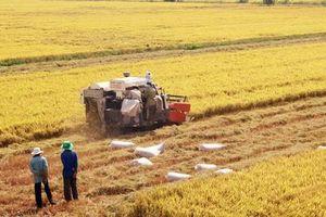 Nâng tầm giá trị hạt gạo Việt