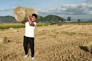 Rộn ràng mùa thu hoạch Nếp Quýt ở Đạ Tẻh