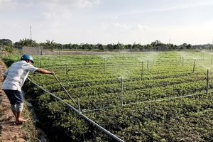 Ứng dụng công nghệ tưới tiên tiến trong sản xuất nông nghiệp