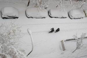 Tuyết kỷ lục ở Tây Ban Nha trong vòng 50 năm