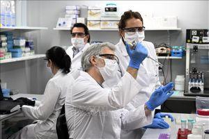 Argentina sử dụng huyết thanh ngựa trong điều trị bệnh nhân COVID-19