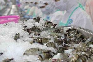 Bất chấp đại dịch Covid, xuất khẩu tôm vẫn 'bật' tăng