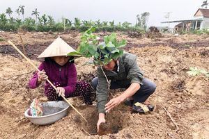 Hiện thực hóa chương trình trồng 1 tỷ cây xanh