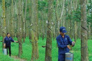 Tập đoàn Công nghiệp Cao su Việt Nam (GVR): Thành viên HĐQT đăng ký mua 200.000 cổ phiếu