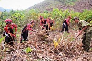 Mường Tè đẩy mạnh việc tái cơ cấu nông nghiệp
