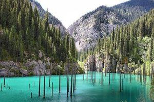 Hồ nước có rừng cây mọc ngược từ dưới đáy