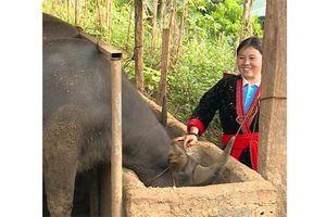 Nữ đảng viên dân tộc H'Mông làm kinh tế giỏi