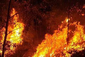 Điều tra nguyên nhân 4ha rừng bị 'bà hỏa' thiêu trụi