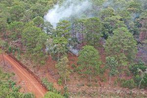 Vụ hàng trăm héc ta rừng đang dần biến mất: Giao rừng cộng đồng cho Ban Quản lý rừng phòng hộ ĐamB'ri