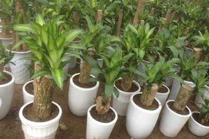 Những loại cây nhà nào cũng cần trồng để hút mọi khí độc